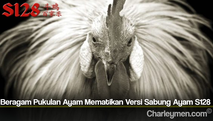 Beragam Pukulan Ayam Mematikan Versi Sabung Ayam S128