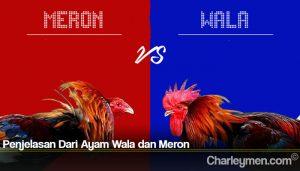 Penjelasan Dari Ayam Wala dan Meron
