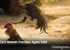 Tips Cara Melatih Patokan Ayam S128