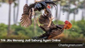 Trik Jitu Menang Judi Sabung Ayam Online